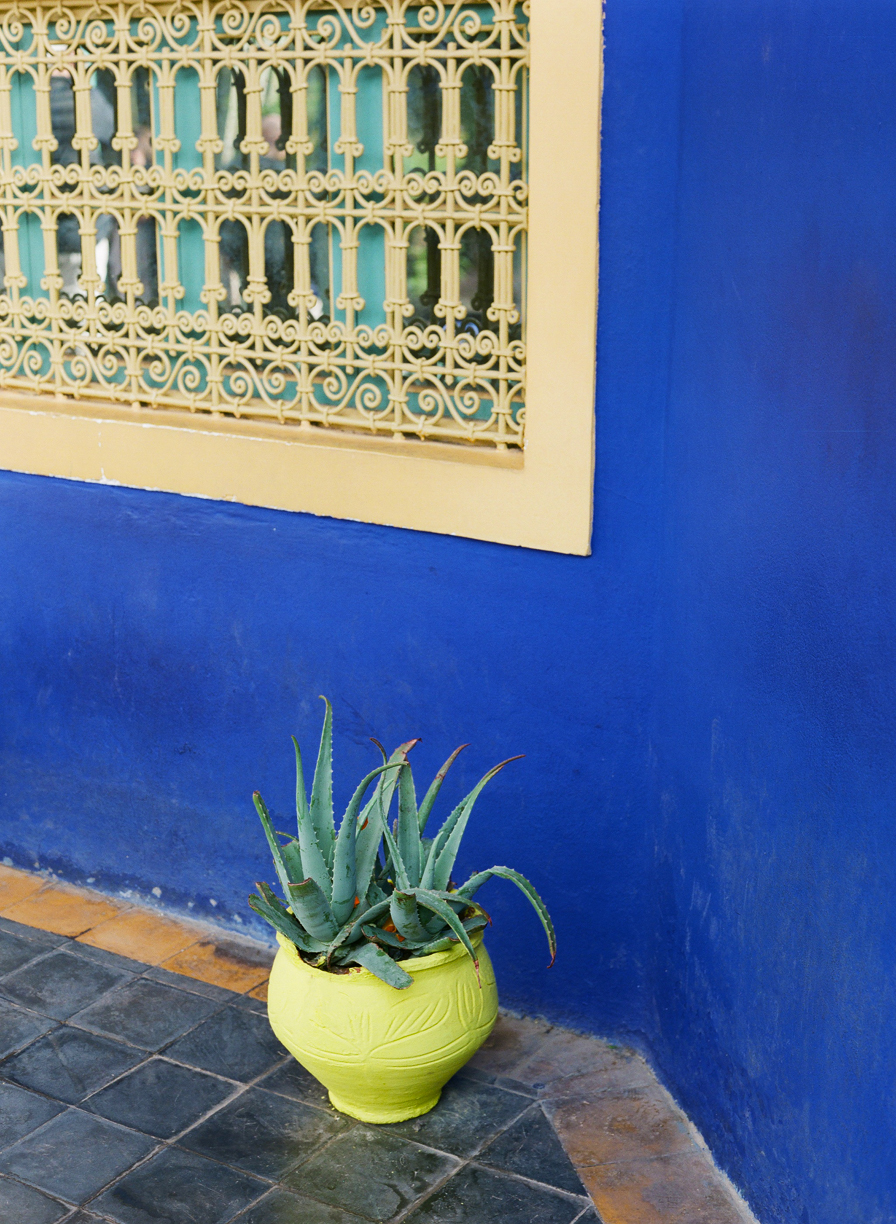 Yellow Pot of Cactus Plant and Blue Wall at Jardin Majorelle_web.jpg
