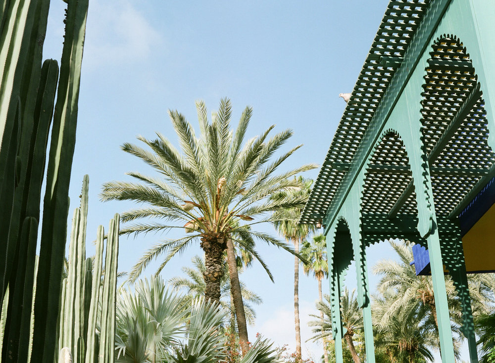 Palm Tree and Sitting Pigeon at Jardin Majorelle_web.jpg