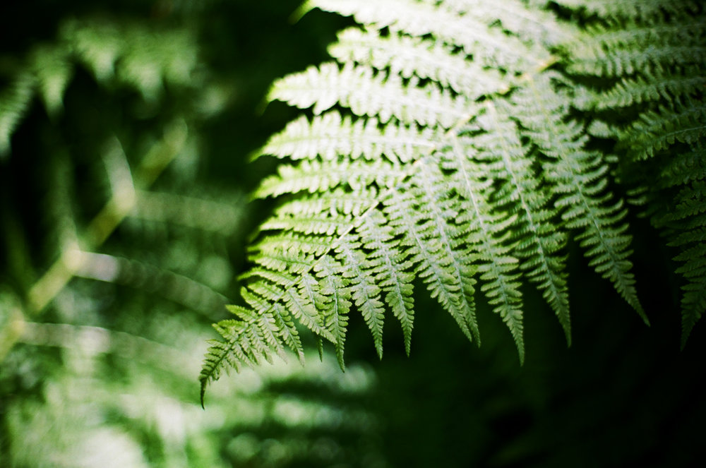 Fern and Shadow_Bokeh_cascades natl park trail_web.jpg
