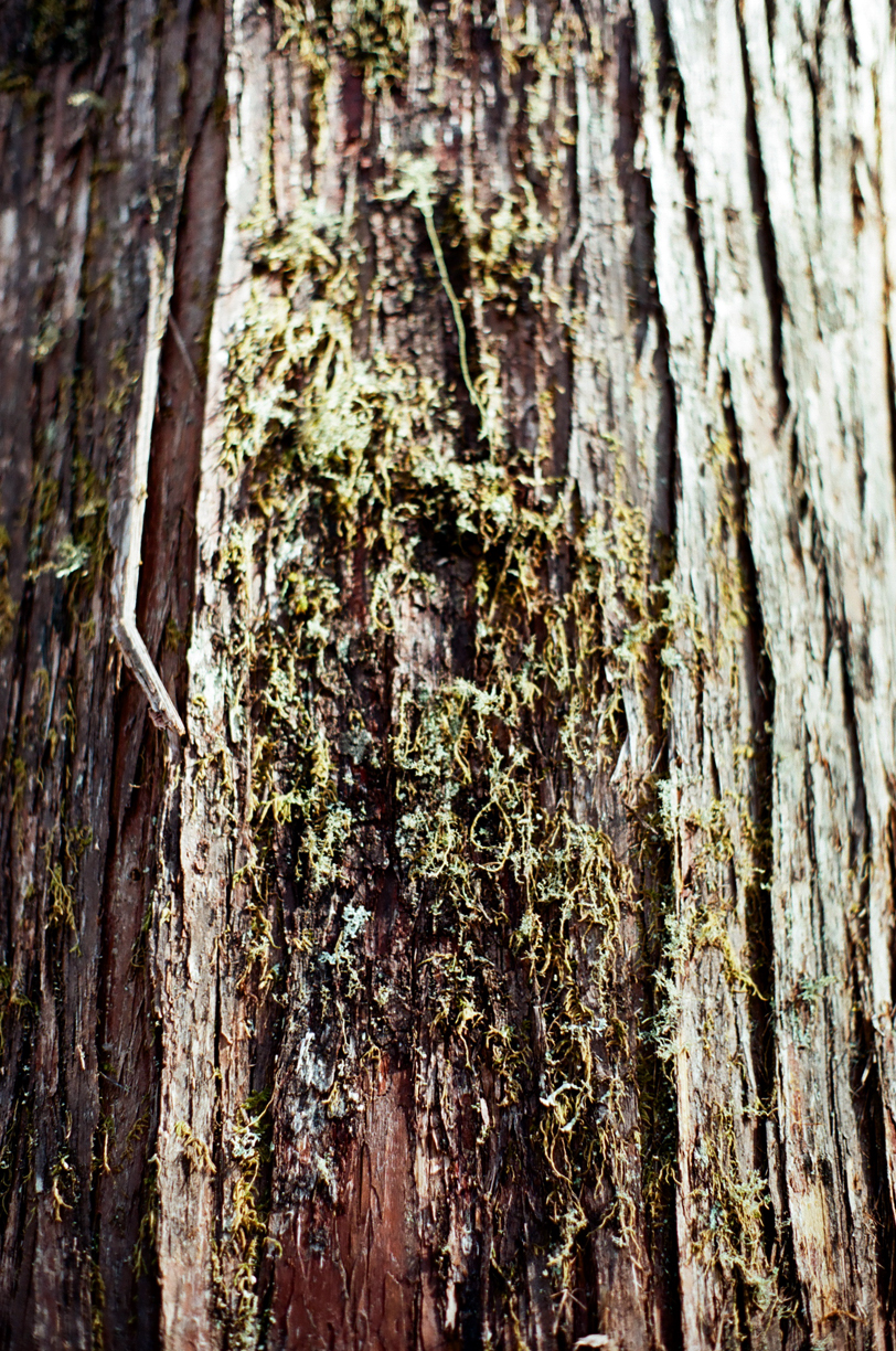 Green Moss on Tree Bark_Vertical_web.jpg