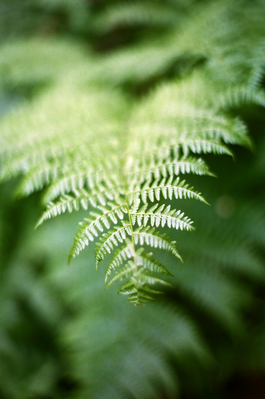 Fern Bokeh Focus_Trail N Cascades_web.jpg