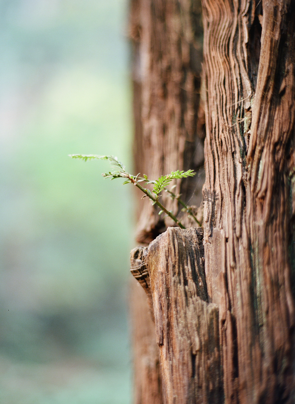 Little Twig from Redwood Tree_Muir Woods_web.jpg