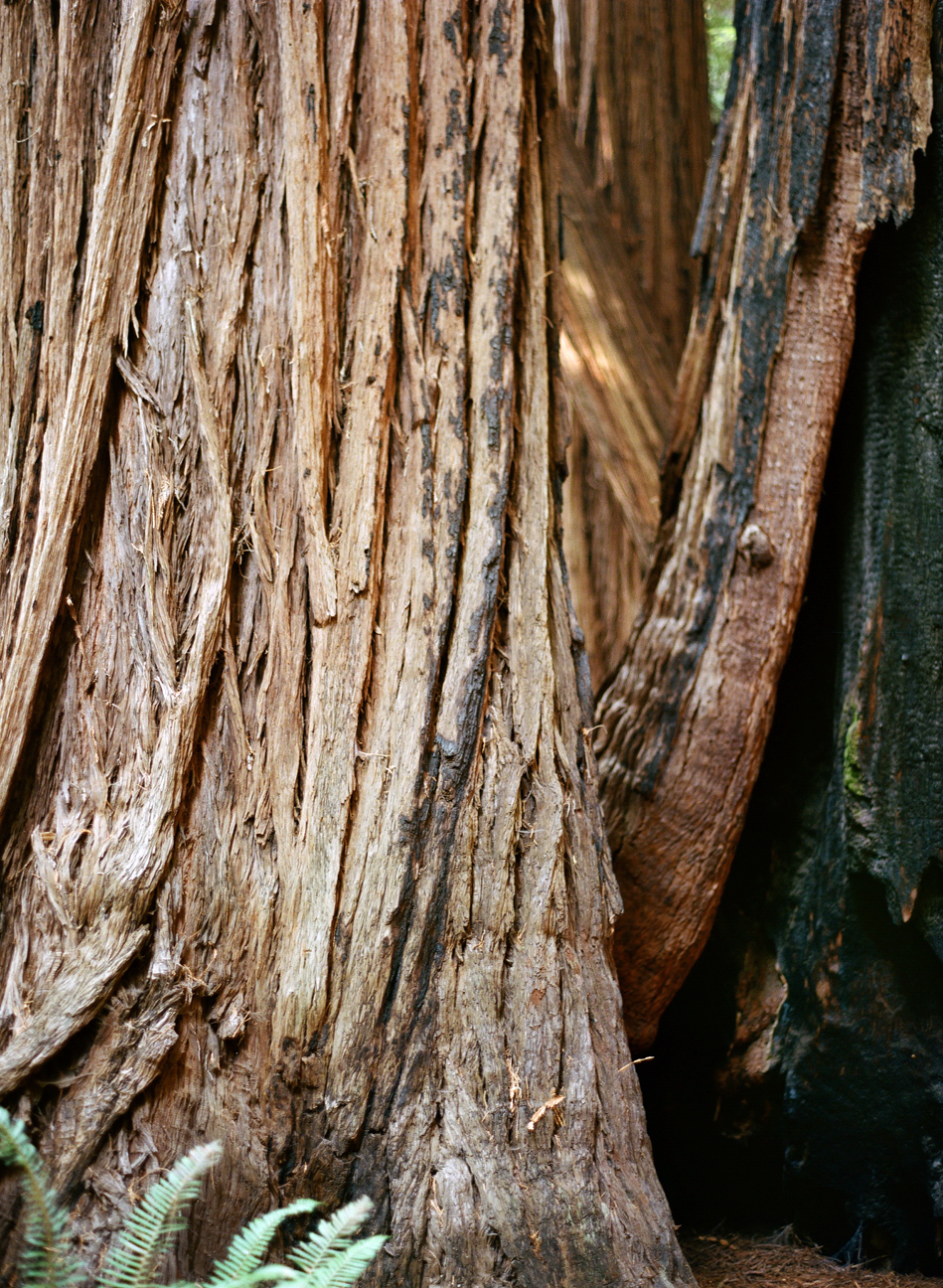 Detail of Bark_Burned Trunk_Muir Woods_Vertical_web.jpg