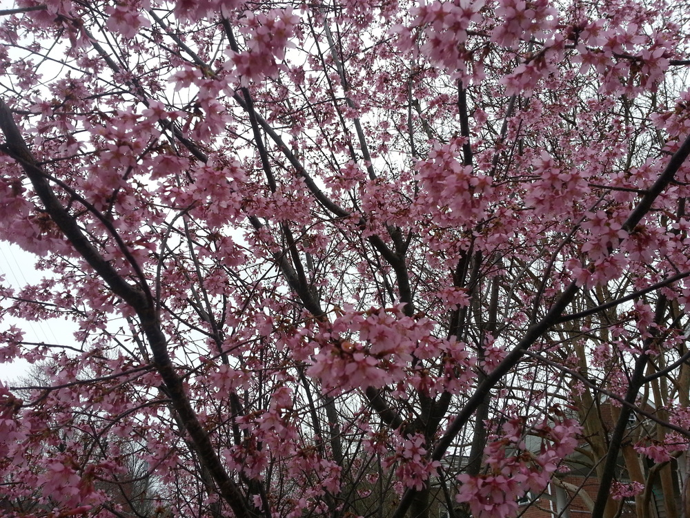 Springtime in the nation's capital: budgets and blossoms. Time to make your voice heard!