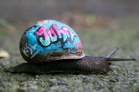graffiti-snails.jpg
