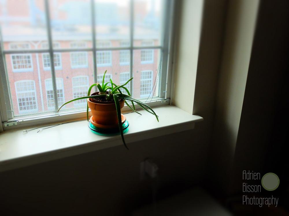 Light of the Window