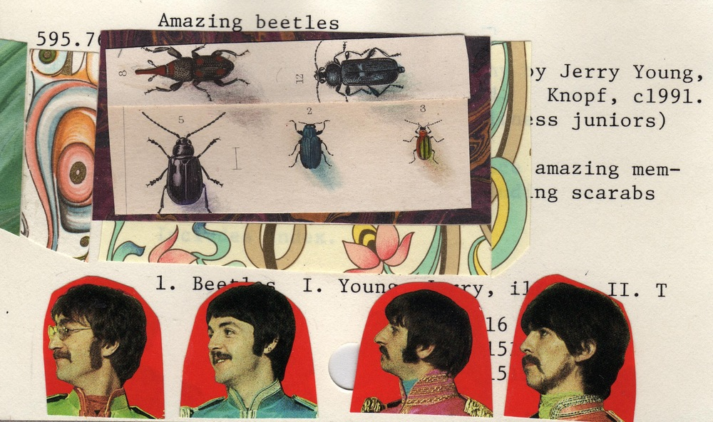 amazing beetles362.jpg