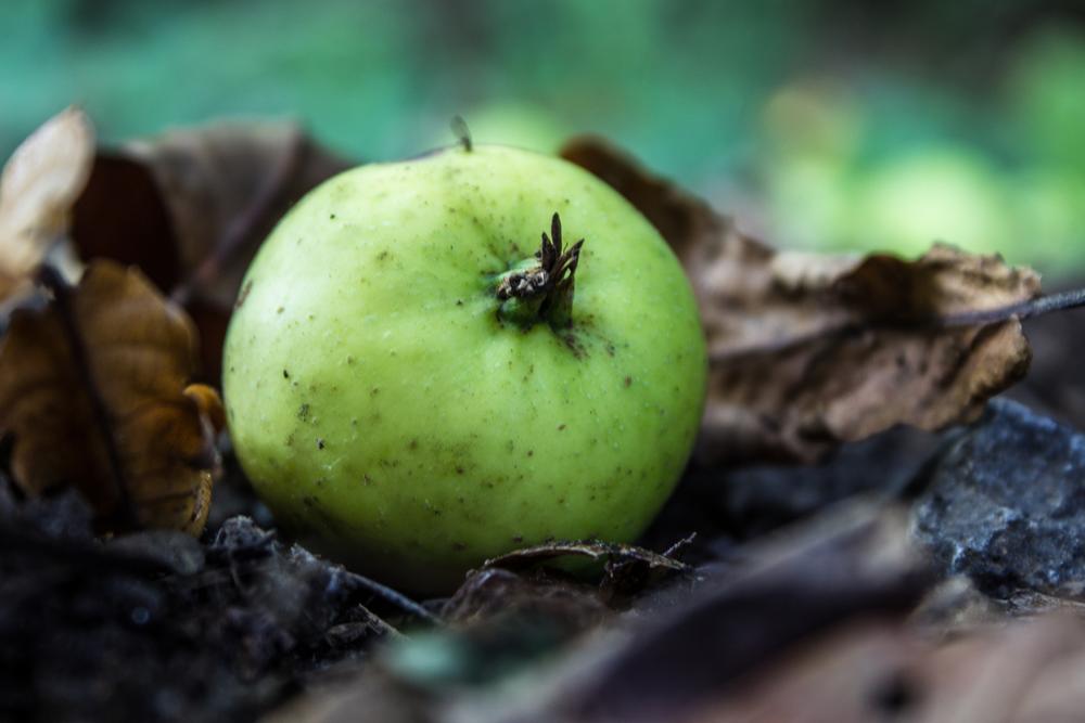 Apple harvest via Photopin (cc)