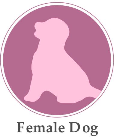 FemaleDog.png