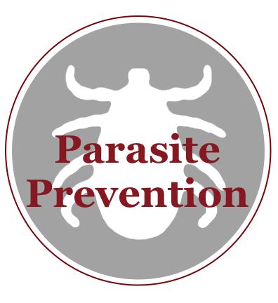Parasite.png
