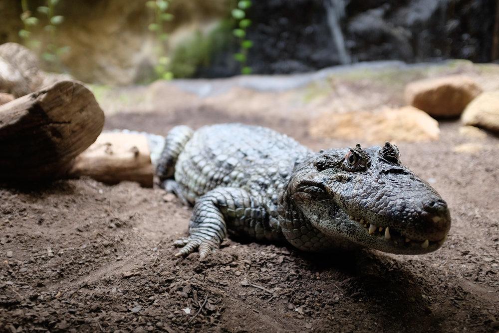 Barcelona Reptile