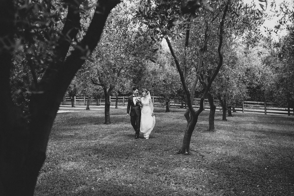 Bride and Groom Walk among olives at Bracu Estate