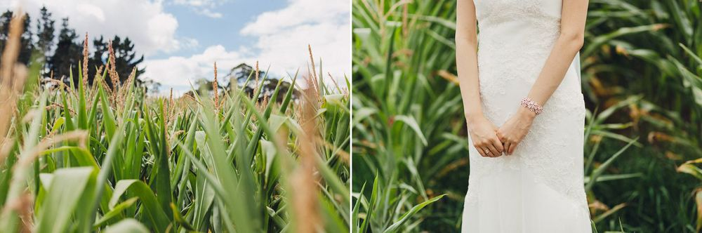 Cornfield Wedding Photos Auckland New Zealand