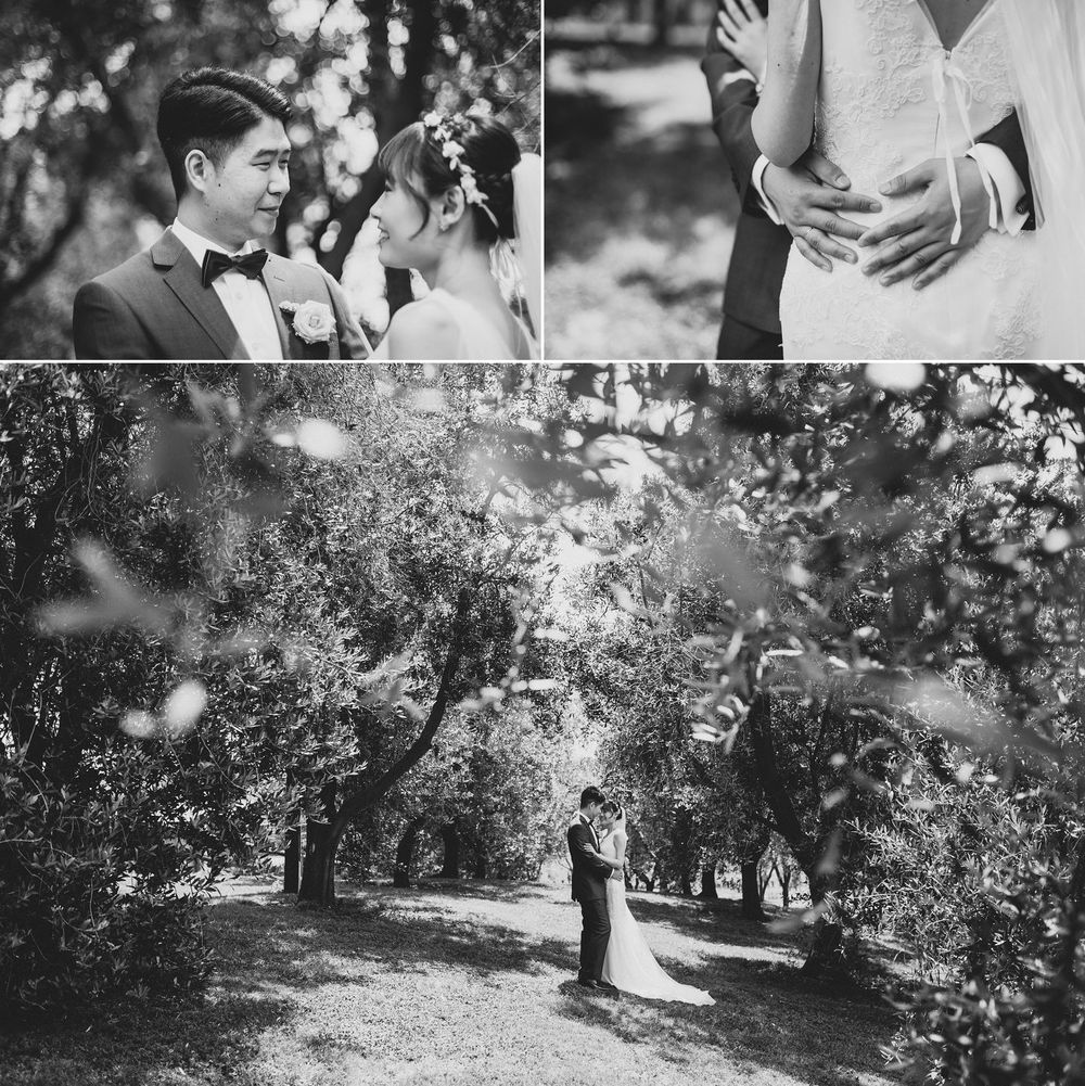 Wedding Photos in Bracu Olive Grove