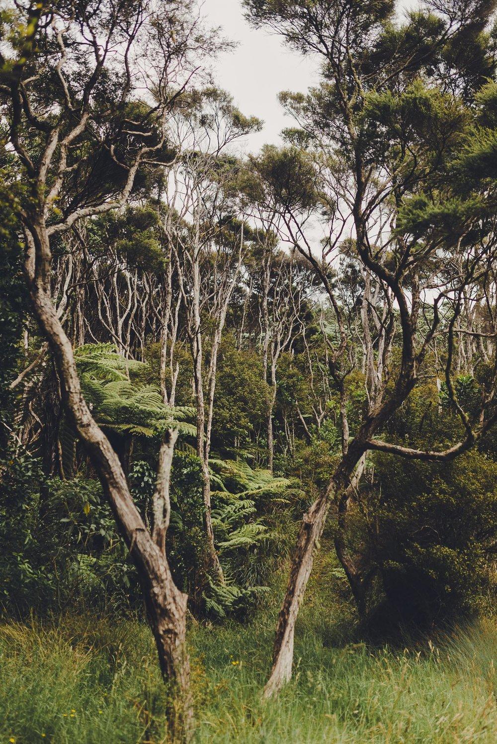 Landscape photo of trees in Coromandel