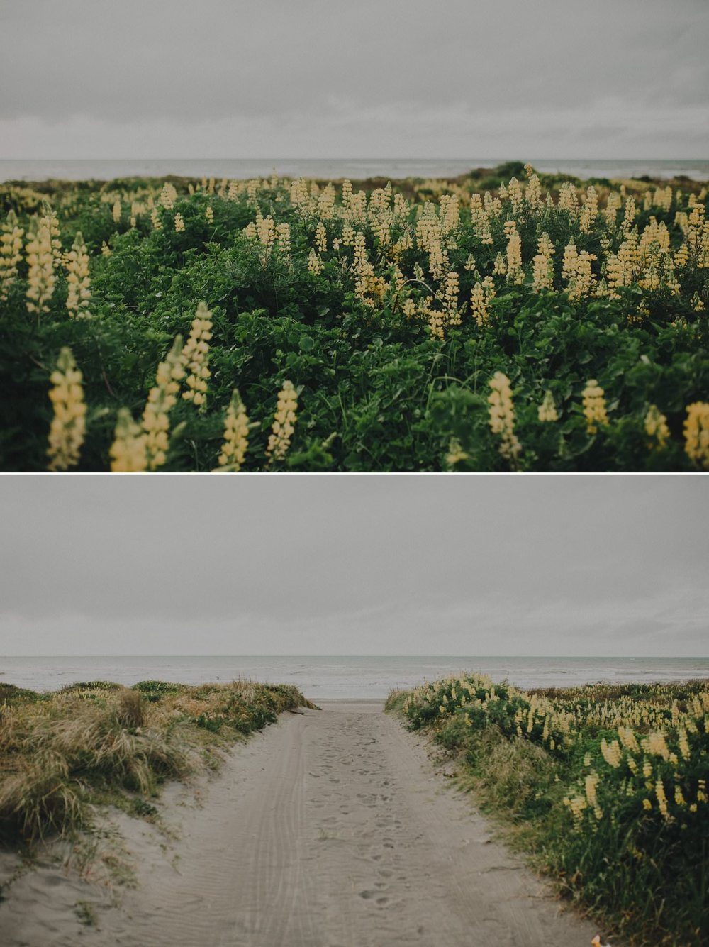 Otaki beach wedding