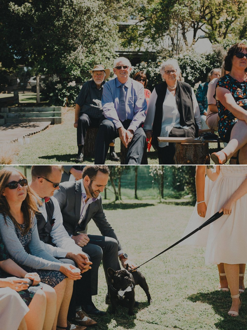 French bull dog. Dog ring bearer at New Zealand summer garden wedding.