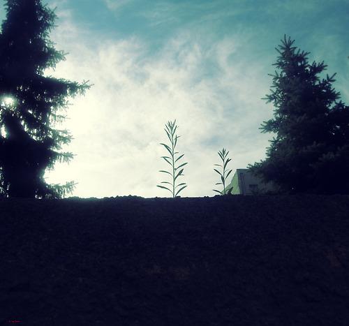 tumblr_mg2fpoWEPG1ruytlro1_500_large.jpg
