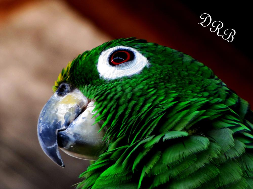 GL Parrot 006.JPG