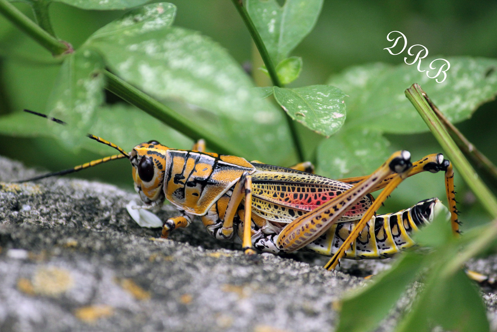 LPZ Primate World Grasshopper 001.JPG