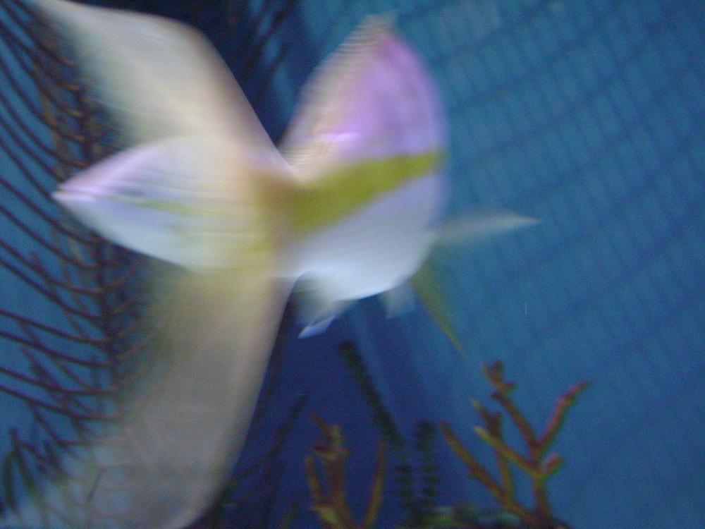 MML Fish 001.JPG