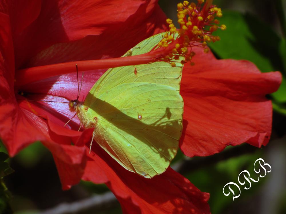 SJG Butterfly 002.JPG