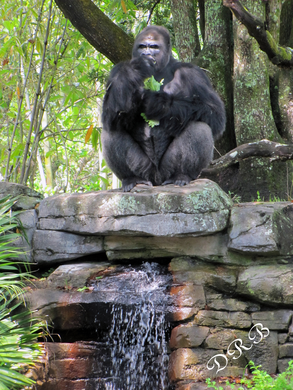 WDW AK Africa Pangani Forest Exploration Trail Gorilla 026.JPG