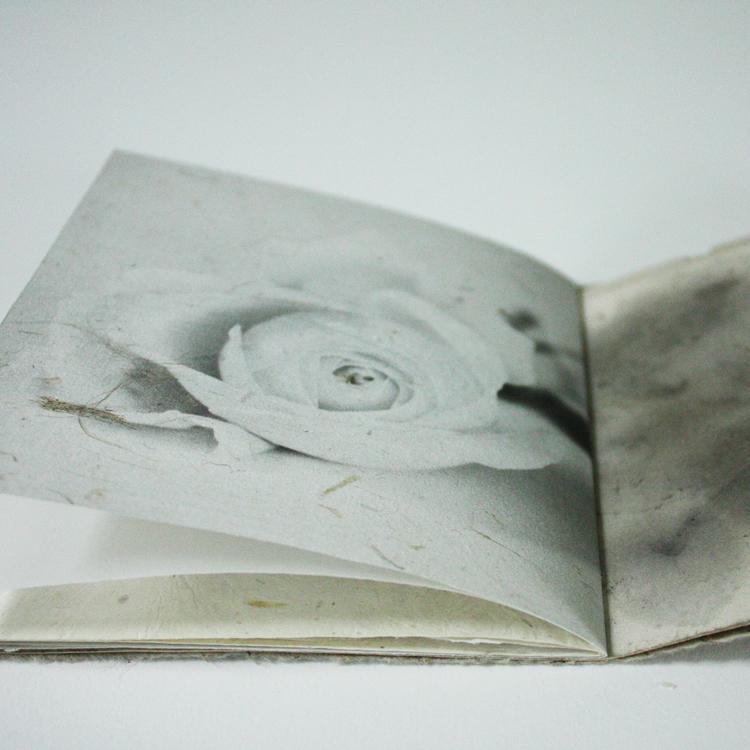 Book_roses_8.jpg