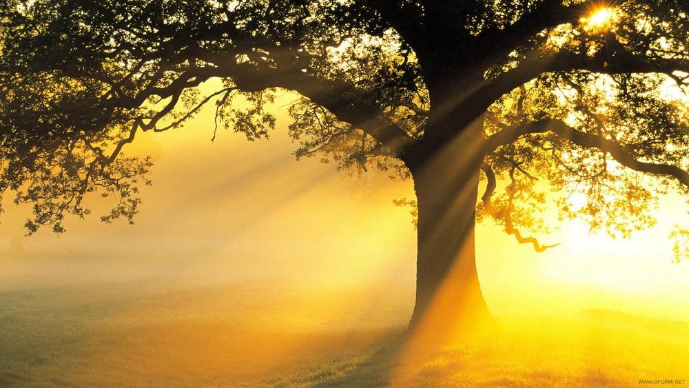 Yellow_Tree_ROGER-1.jpg