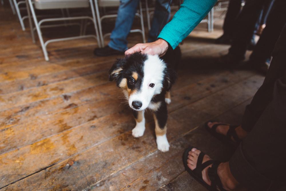Legends & Lore Puppy International Climber's Festival