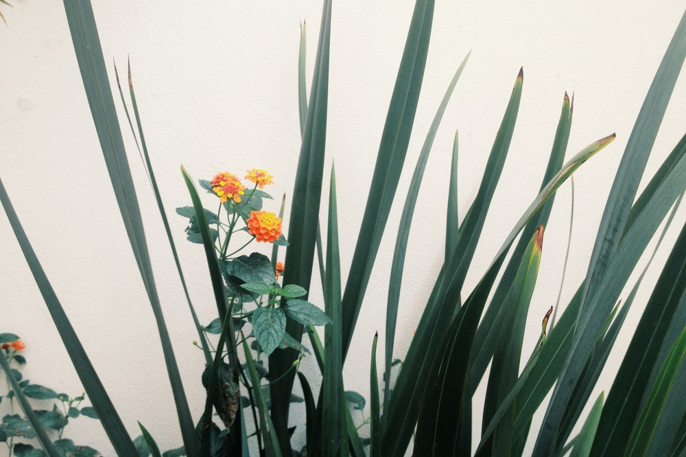 photo(86).JPG