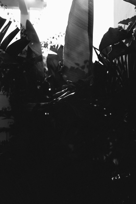 Capri-44.jpg