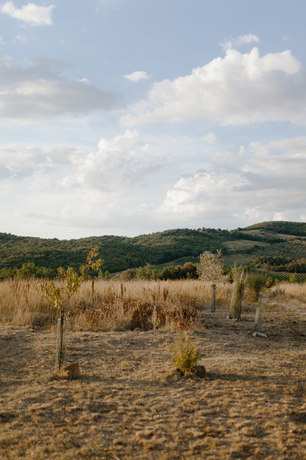 Val d'Orcia-6.jpg