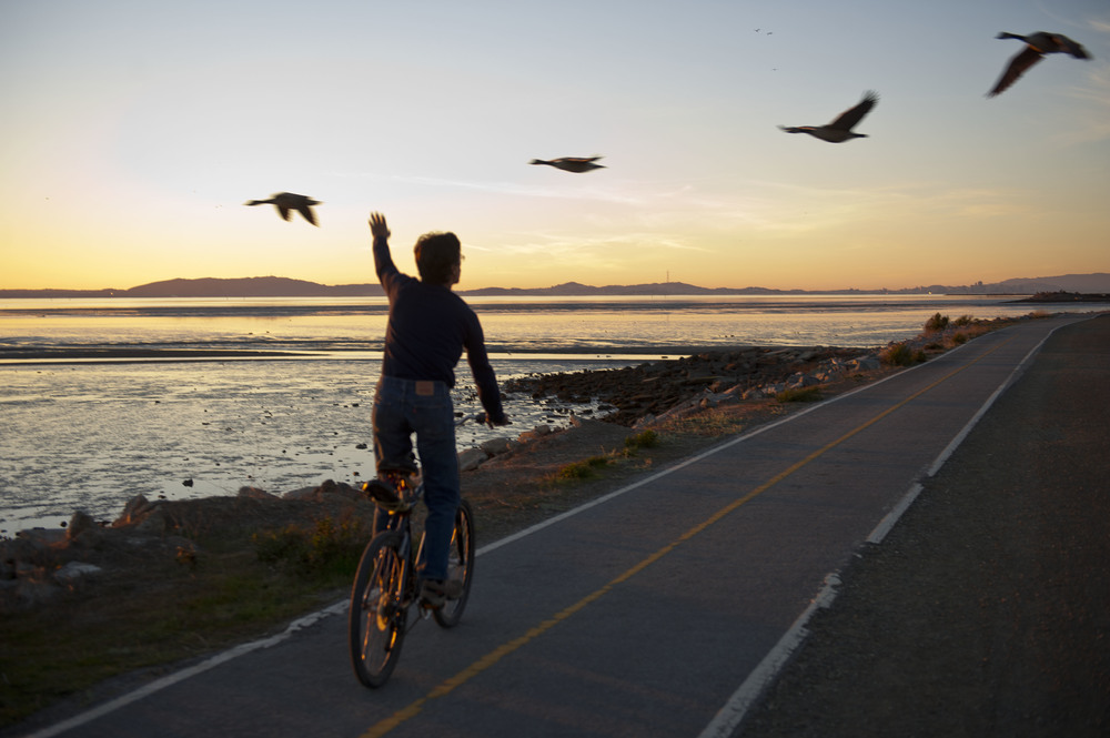 Steve & Geese. San Leandro, CA 2014