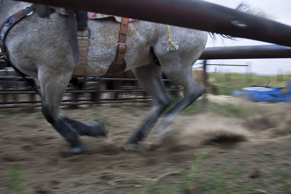 Hooves and dust. Worden, Montana