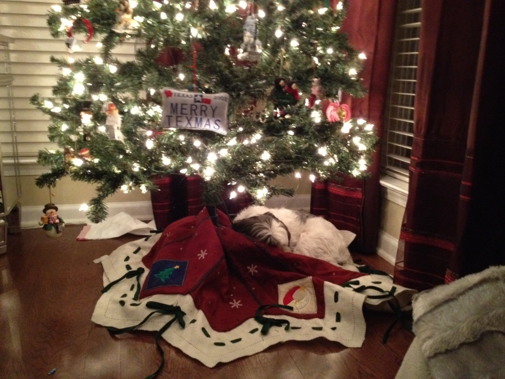 One last Present napping under the tree
