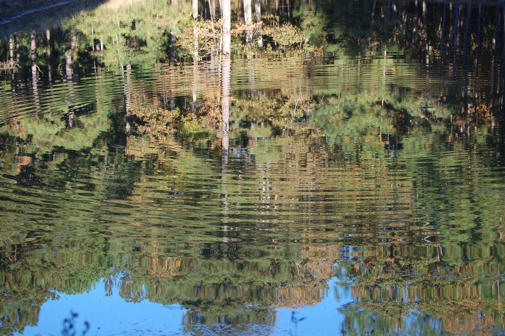 Visiting Mississippi | November '08