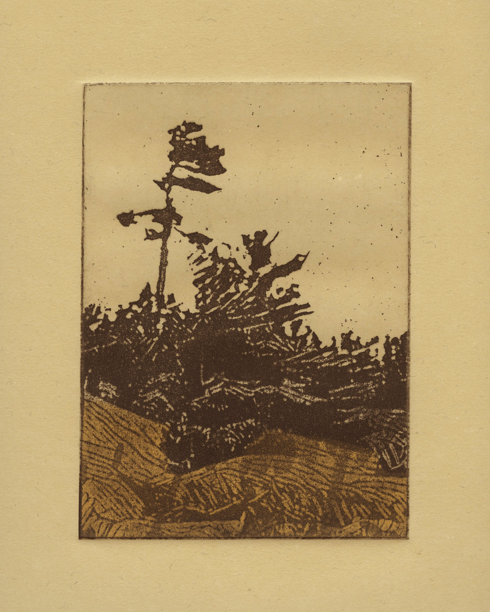 "'White Pine', etching on paper, 5"" x 7"", edition of 20, 2016. $150  This print features a xerox transfer to an aluminium plate and a relief roll of a second colour to the lower portion of the image."