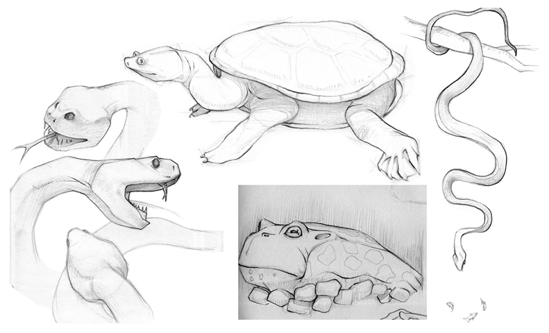 Reptile_Sketches.jpg