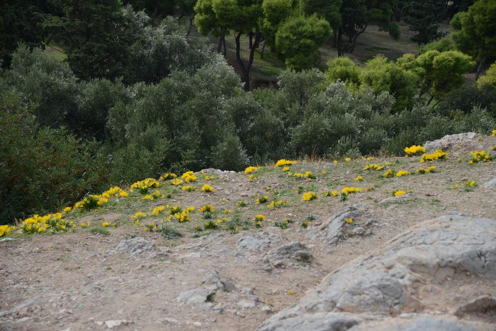 Flowers, Mars Hill
