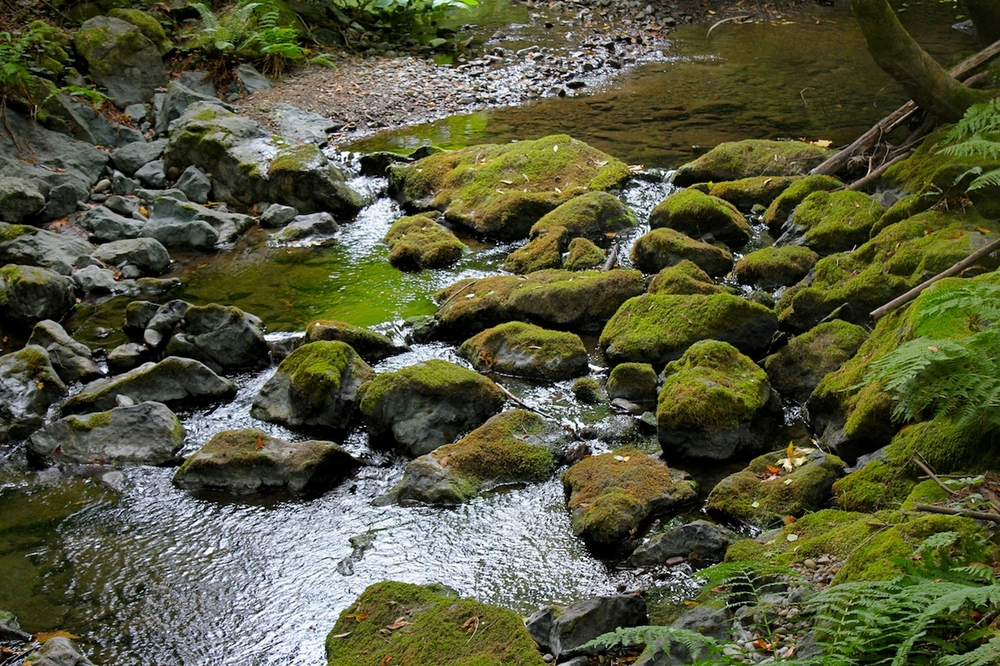 Mossy Rocks in a Brook
