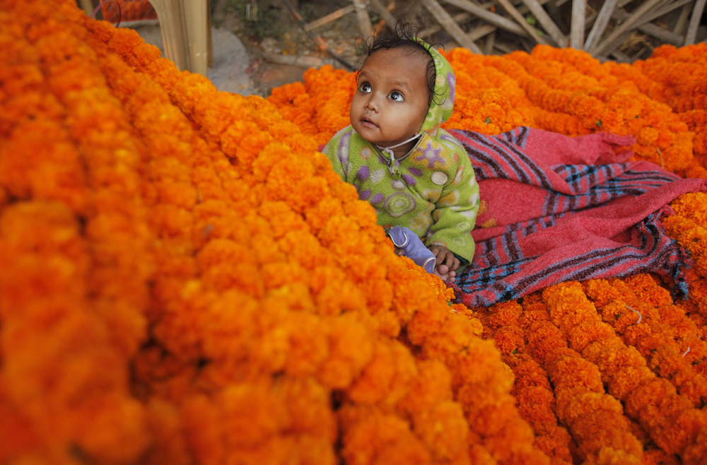 Child on Marigolds