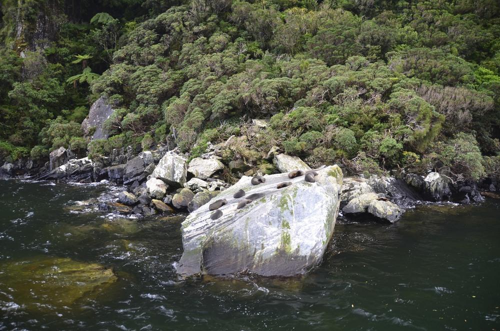 New Zealand 2013  89 2013-09-24.jpg