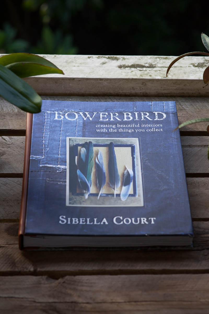 Bowerbird1.JPG