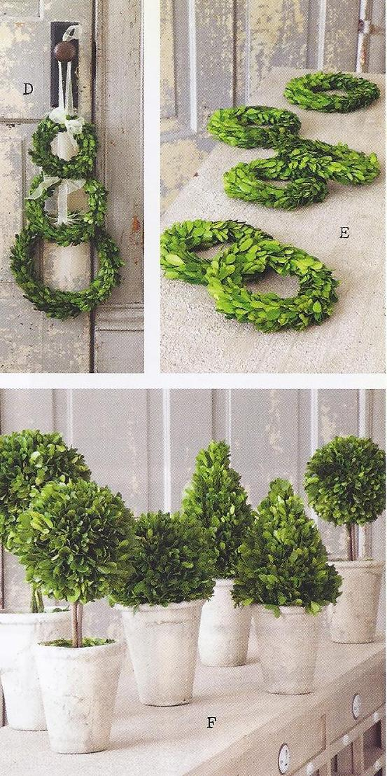 boxwood.topiaries.providence.ltd.design.jpg