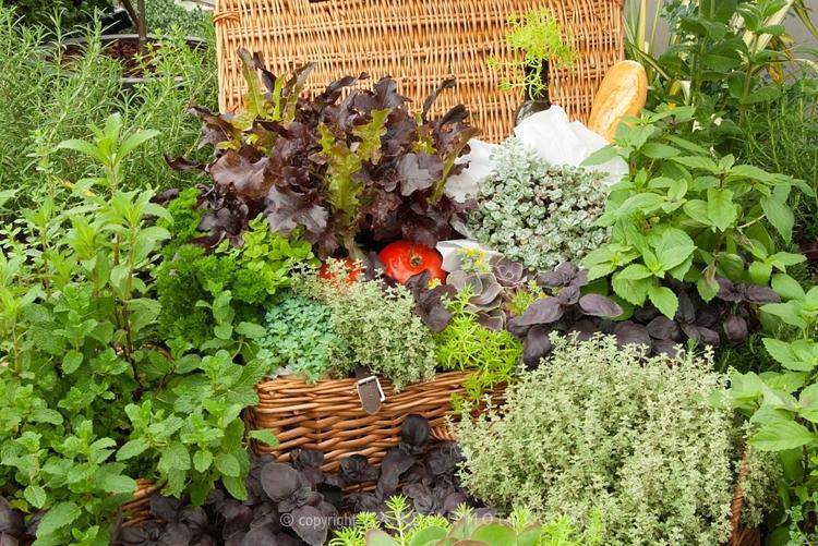 Herb-Garden-Picnic-JWW2782.jpggoogle.jpg