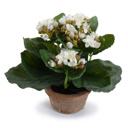 Small Potted Kalanchoe- $46
