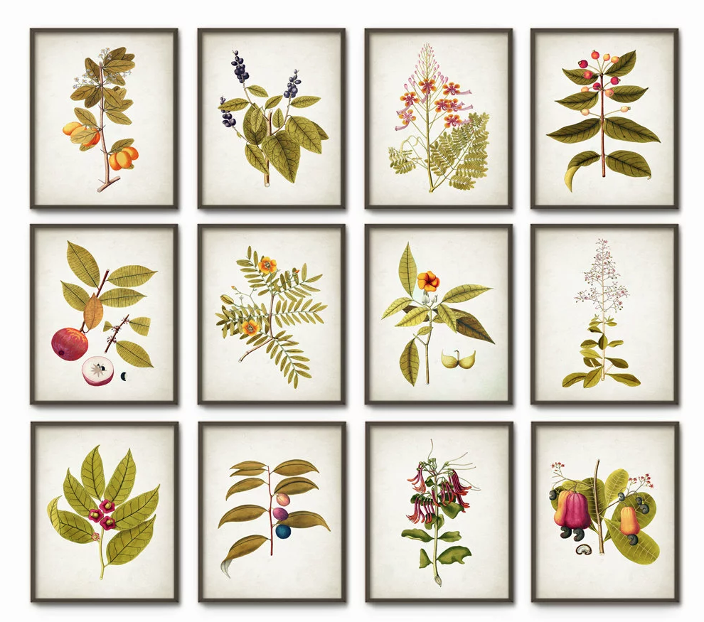 Botanical Prints  - Image via  Quantum Prints on Etsy