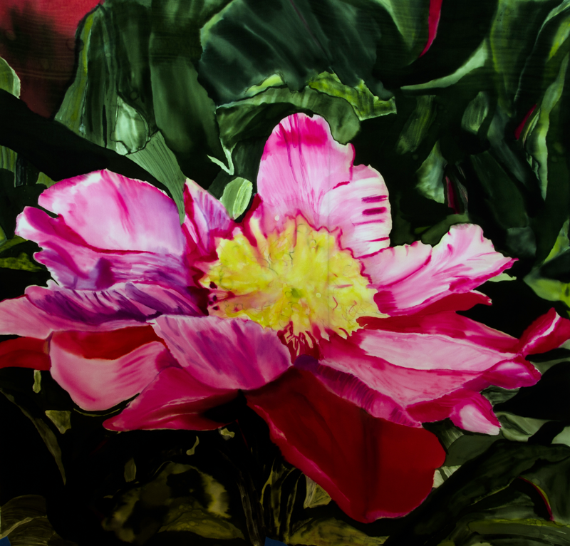 "Large Pink Camellia from Emil Nolde's Garden  2012, 30""x30""  $720"