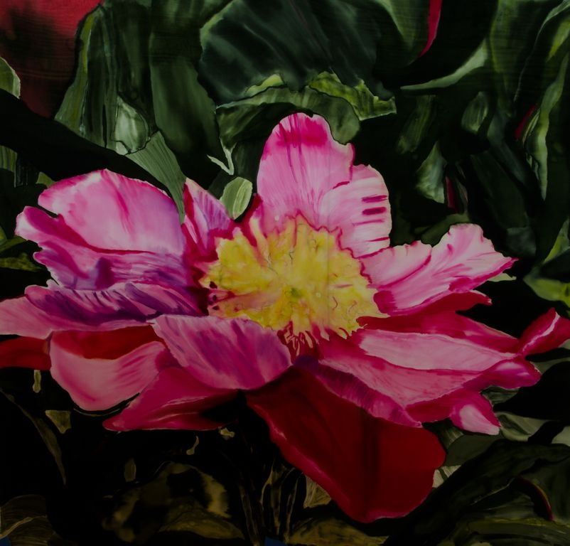 Pink Camellia from the Emil Nolde Gardens in Germany
